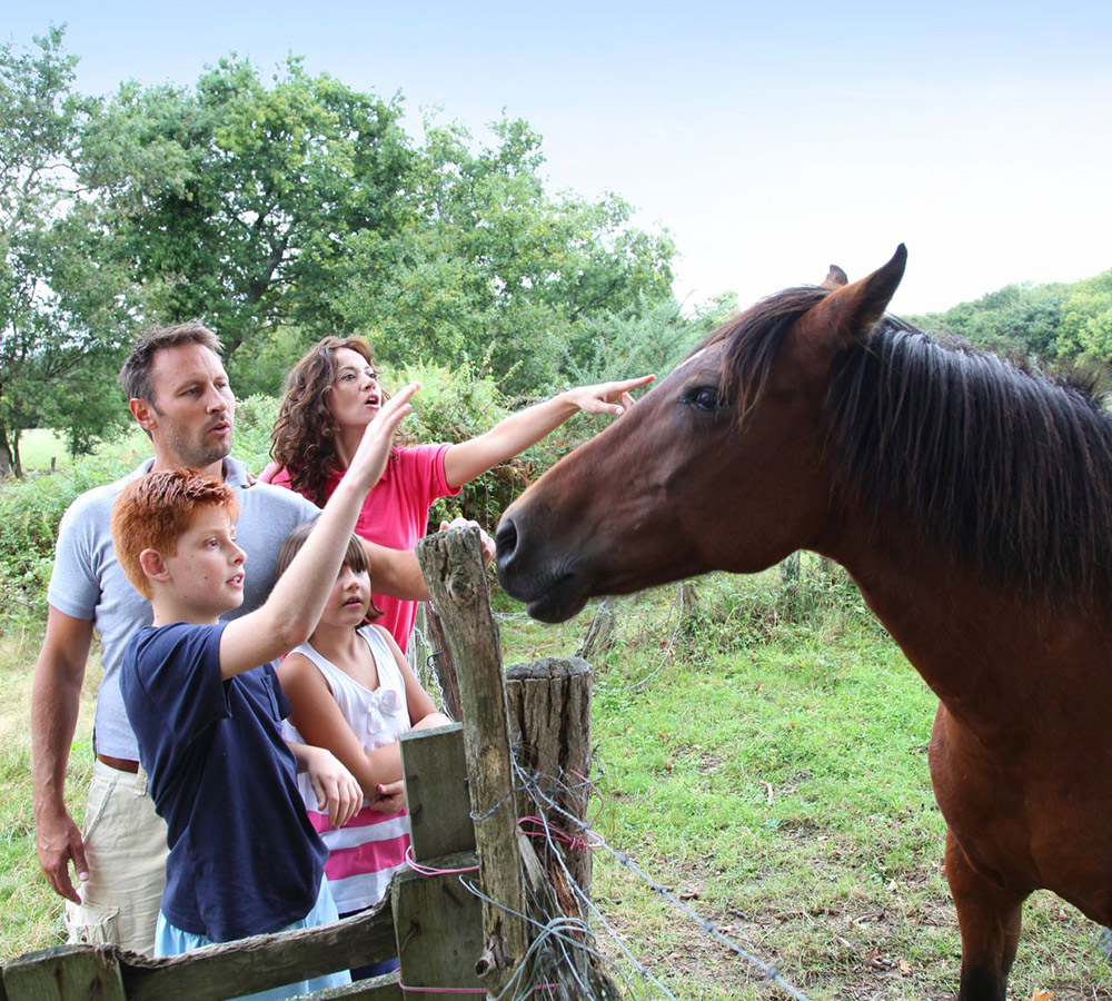 Holiday with horses